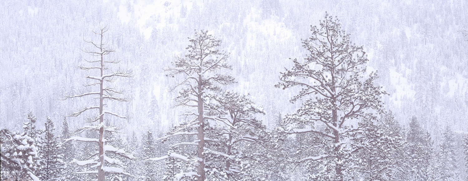 Christmas Valley Blizzard Panorama, Lake Tahoe