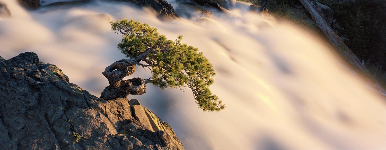 High Sierra Bonsai Panorama.jpg