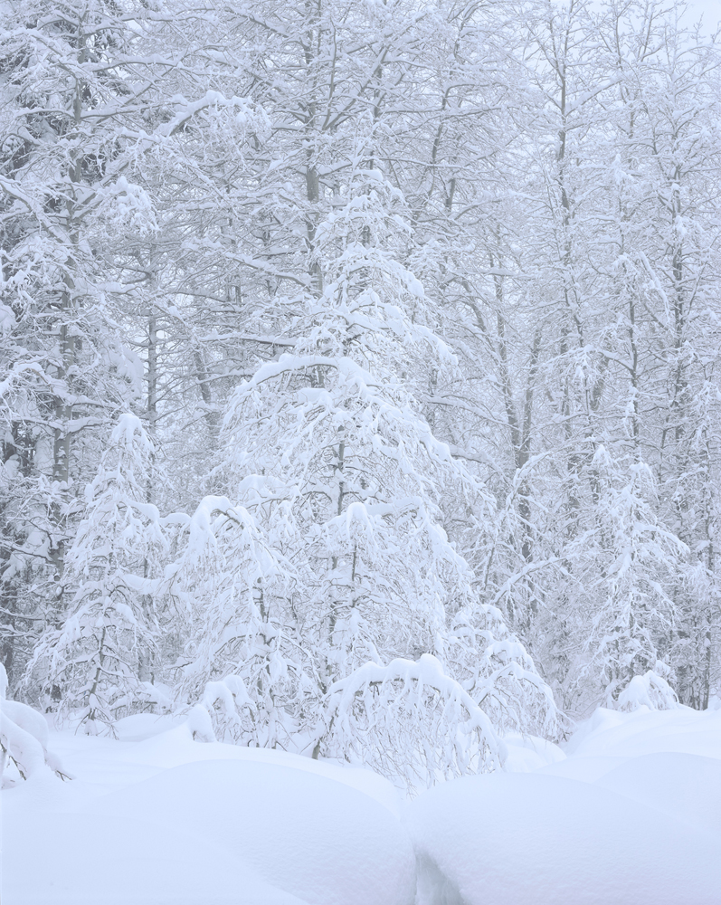Forest Lace, Blizzard