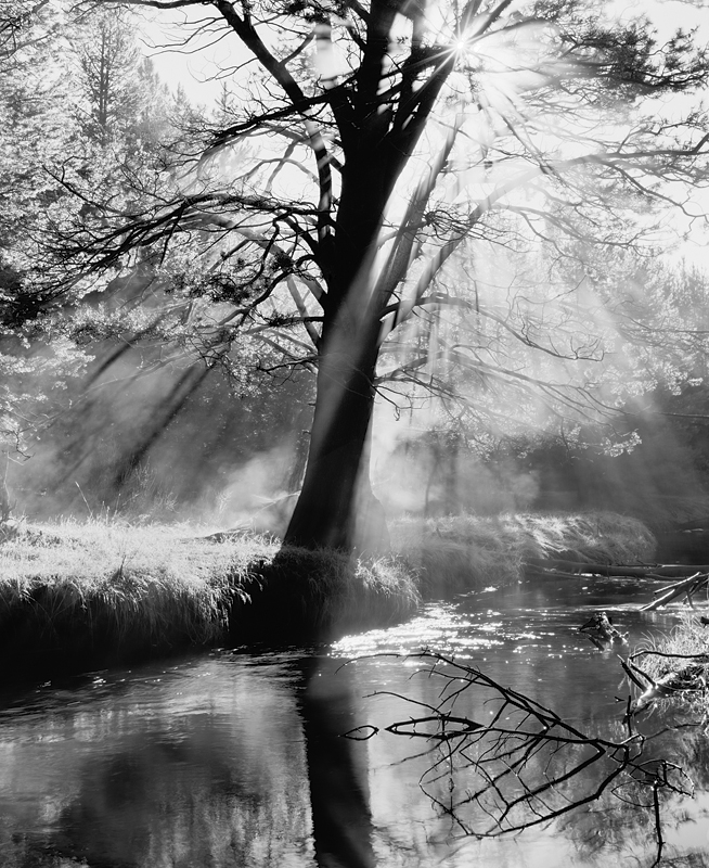 Steaming Trees, Light Rays and Reflections