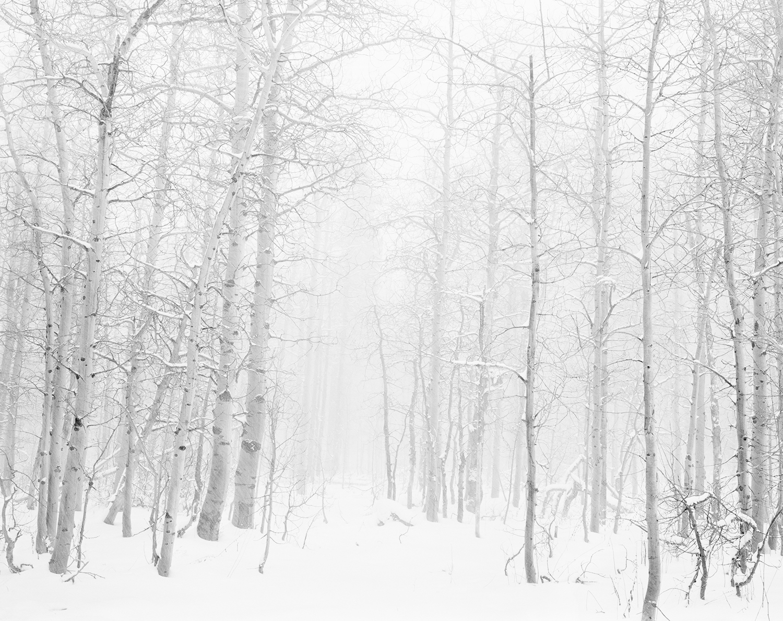 Into the Snowy Aspens 4x5 BW.jpg