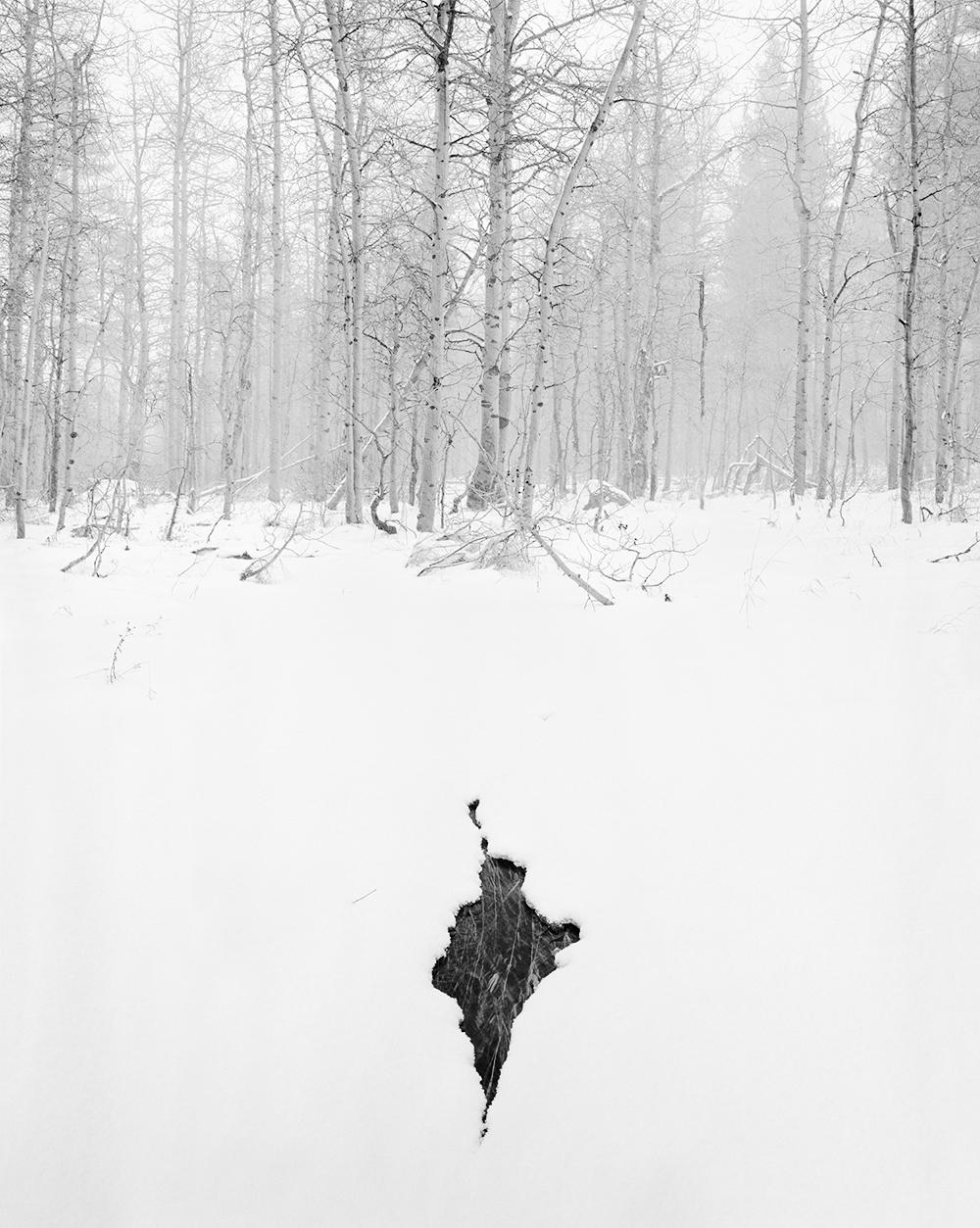 Snowfall, Aspens, crack in snow.jpg