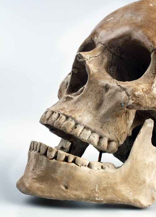 Anatomy Lesson - What's inside the mouth?