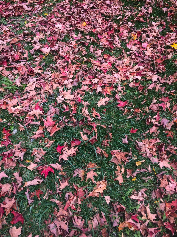 fall2015_11.jpg