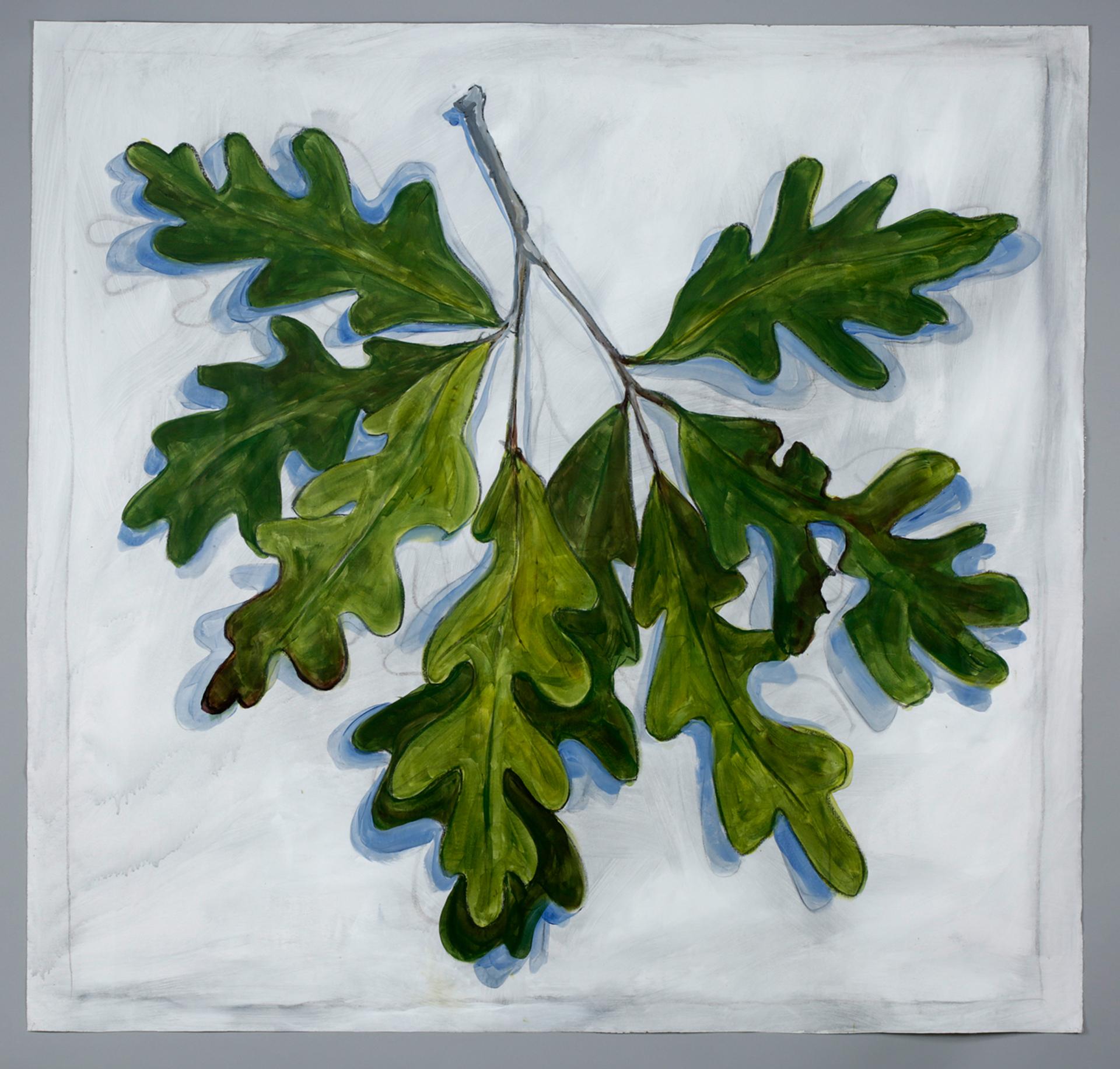 oak leaf cluster.jpg