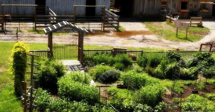 2011 Garden.jpg