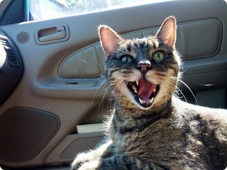 cat-funny-face-in-car-r-default.jpg