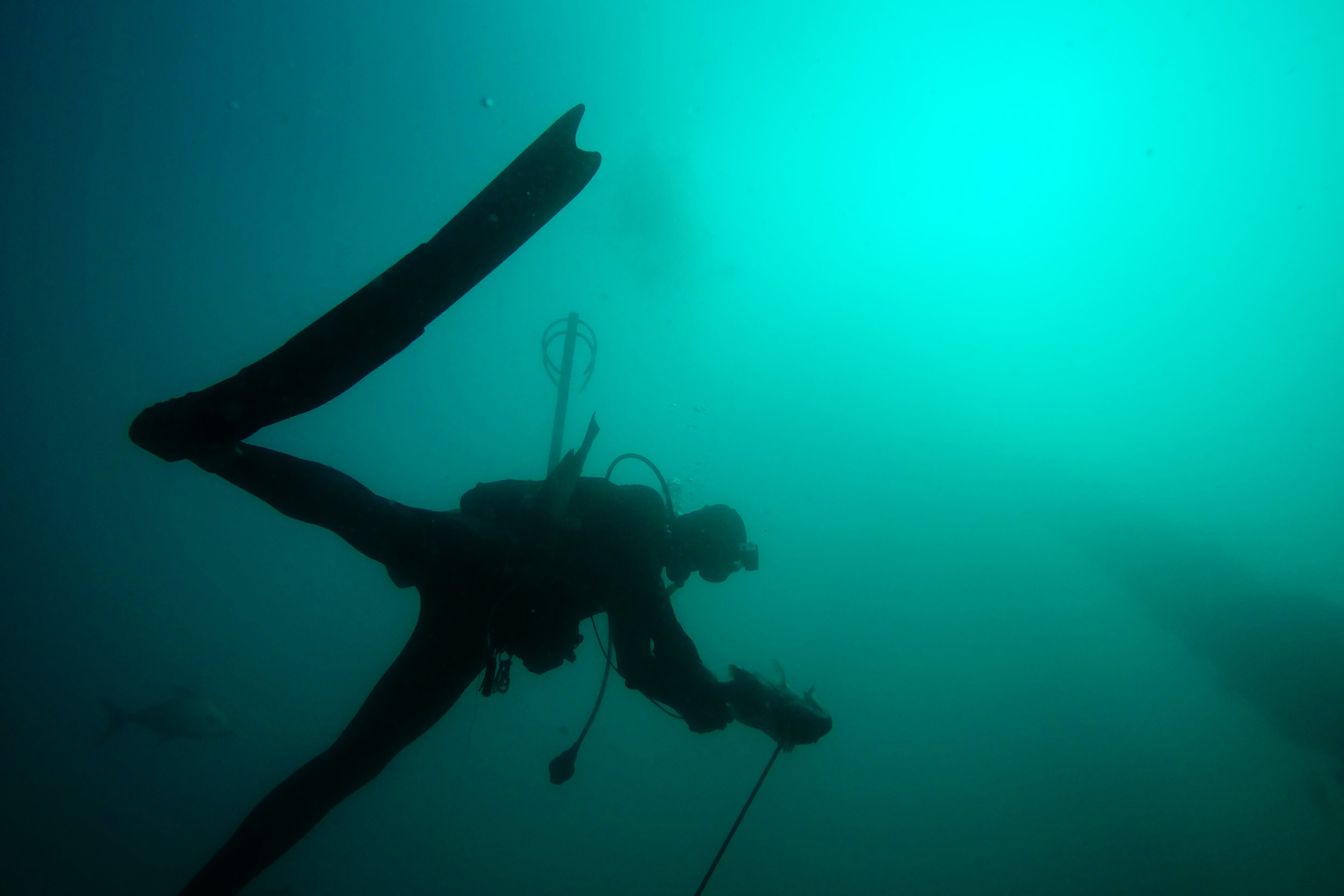 """Collier County Waterkeeper Bill D'Antuono spears a Snapper while diving below one of the support beams for Air Force Radio Tower """"R"""" (seen at right) Wednesday, Feb. 8, 2017 about 30 miles off the coast of Naples, Fla. The fate of the tower is in question as the Air Force decides to sink it, creating an artificial reef, leave it untouched, or remove it entirely. The old decommissioned Air Force radio tower is known as a local Naples hotspot for fishing and diving."""