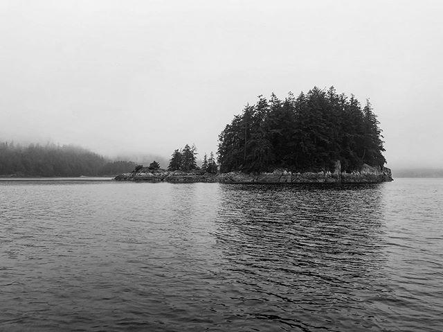 Misty morning in the Great Bear Rainforest🌲