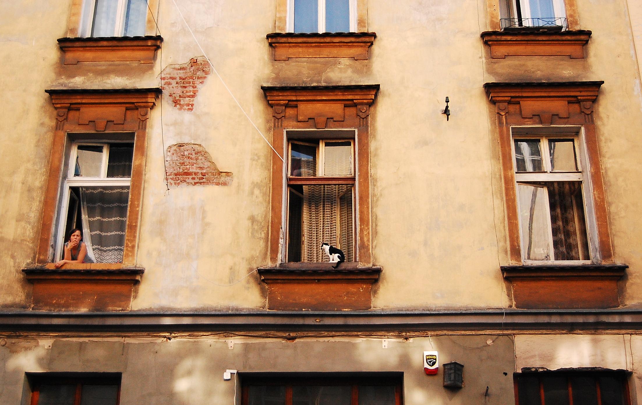 windowladycat.JPG