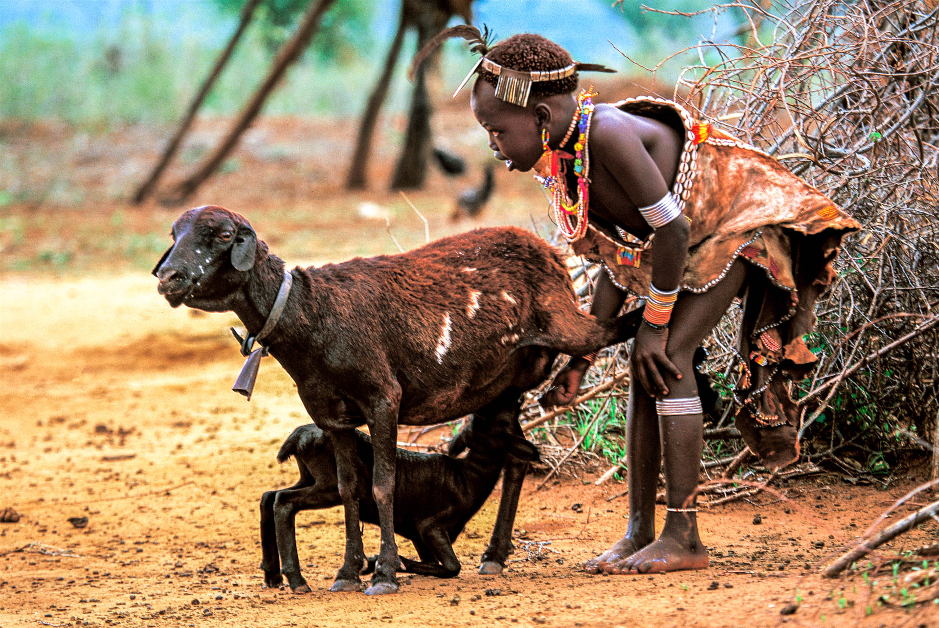 A girl from Arna is about to milk a goat.
