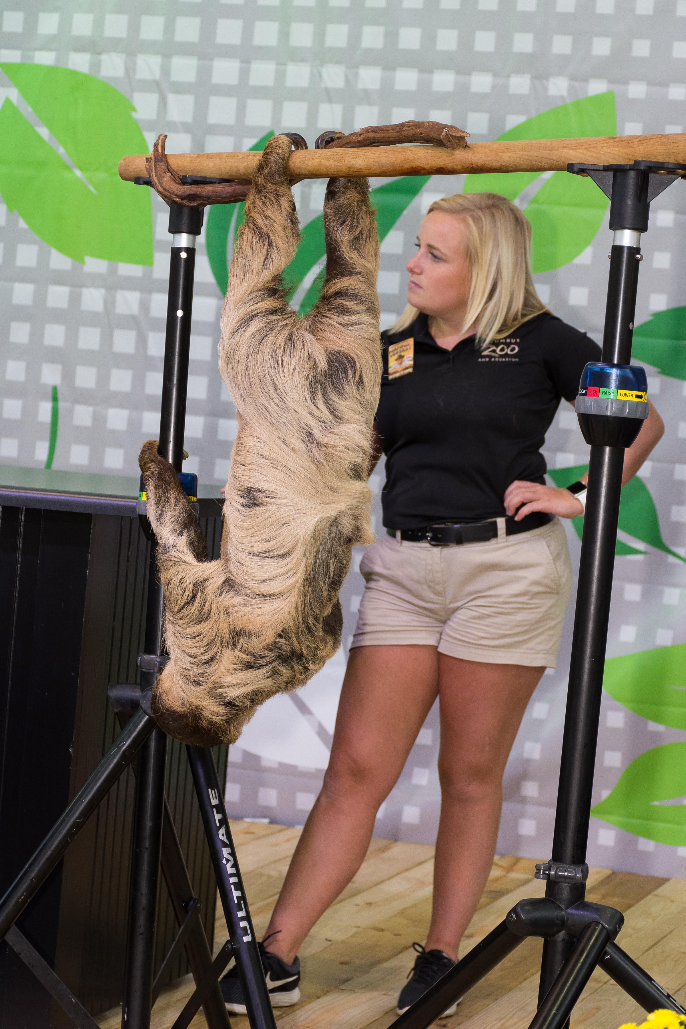 DSC_4335-zoo animals always appear on kids day.JPG