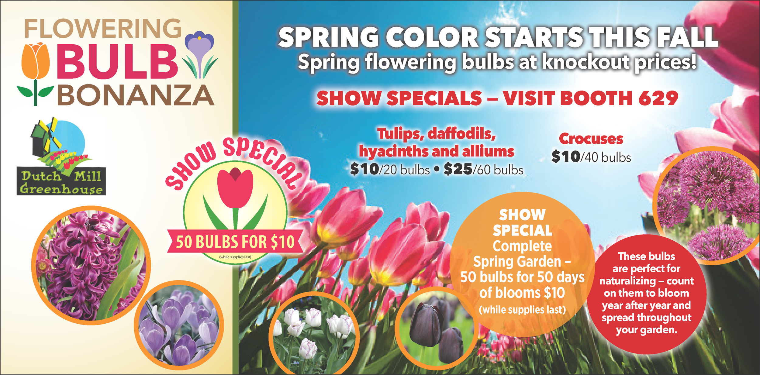 Flowering Bulbs at Wholesale Prices - These flowering bulbs are imported straight from Holland by Leo Berbee Bulb Company. Brighten up your spring garden and stock up with low wholesale prices on tulips, daffodils, hyacinths, alliumns, and crocuses.!