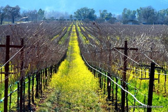 napa vineyards6.JPG