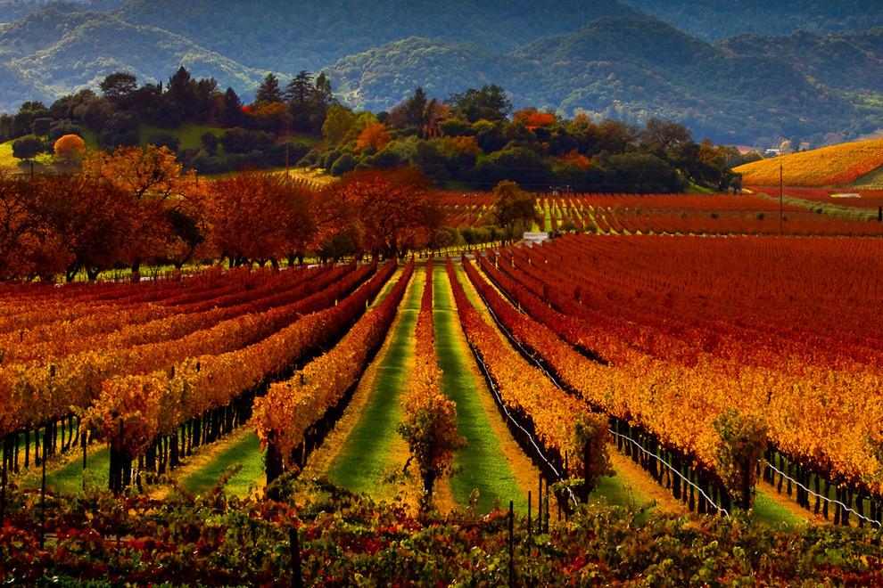 napa vineyards5.jpg