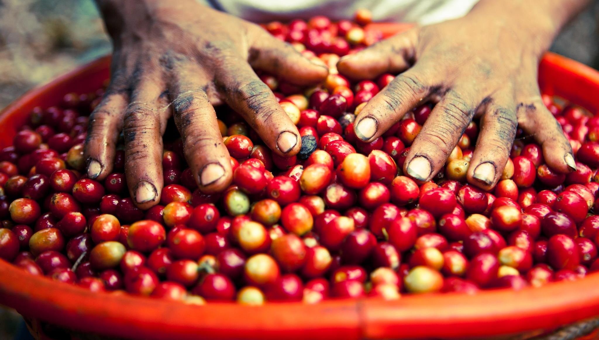 Jones Coffee Farmer