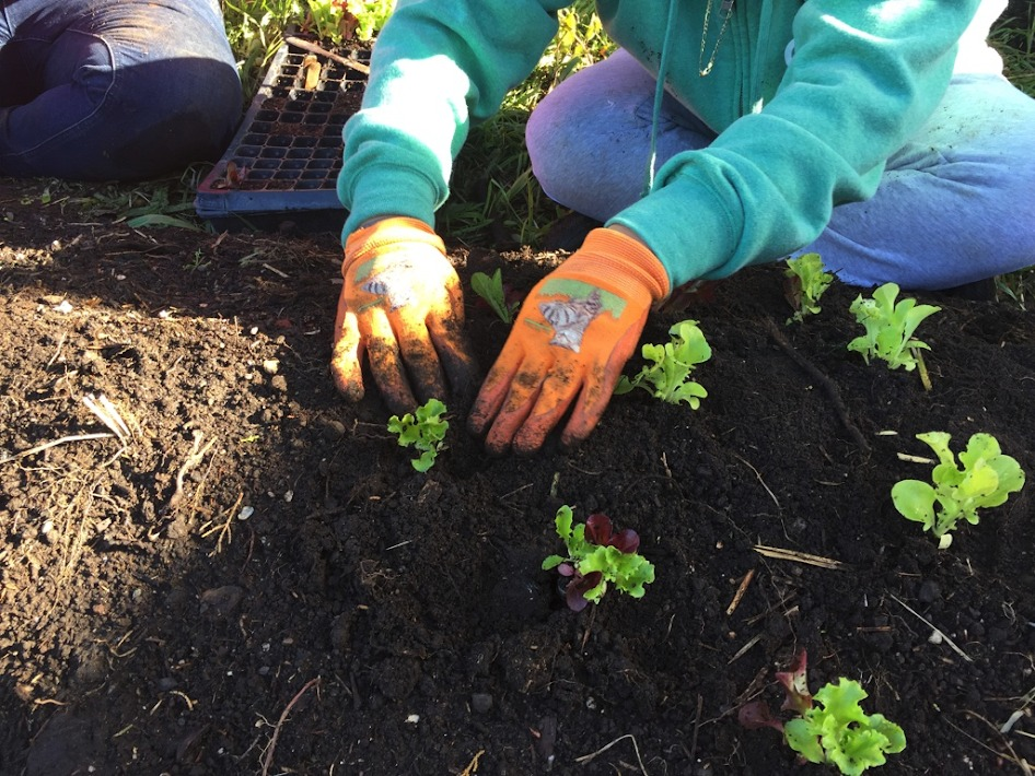 next-steps-liaison-project-culinary-garden-3.jpg