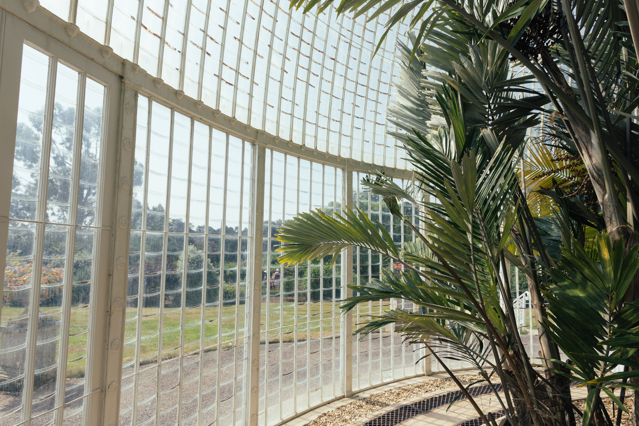 inside Bicton palm house
