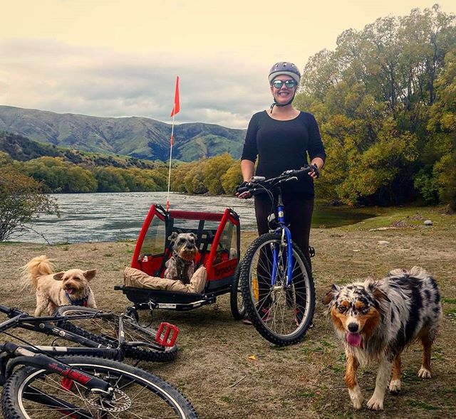 Its a Dog Day Afternoon! With March Madness done and dusted this is what a bit of down time looks like. Love my wee family 😍 . . . . . #familytime #dogsofinstagram #mushroomhead #aussiesofinstagram #australianshepherd #bikeadventure #luggate #luggatecelebrant #sayidoinwanaka #celebrantemily #happilyeverafterinwanaka #wanakacelebrant #celebrantwanaka #wanakaweddingcelebrant #wanaka