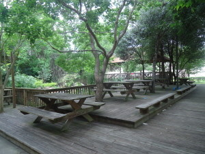 Picnic area and Koi pond
