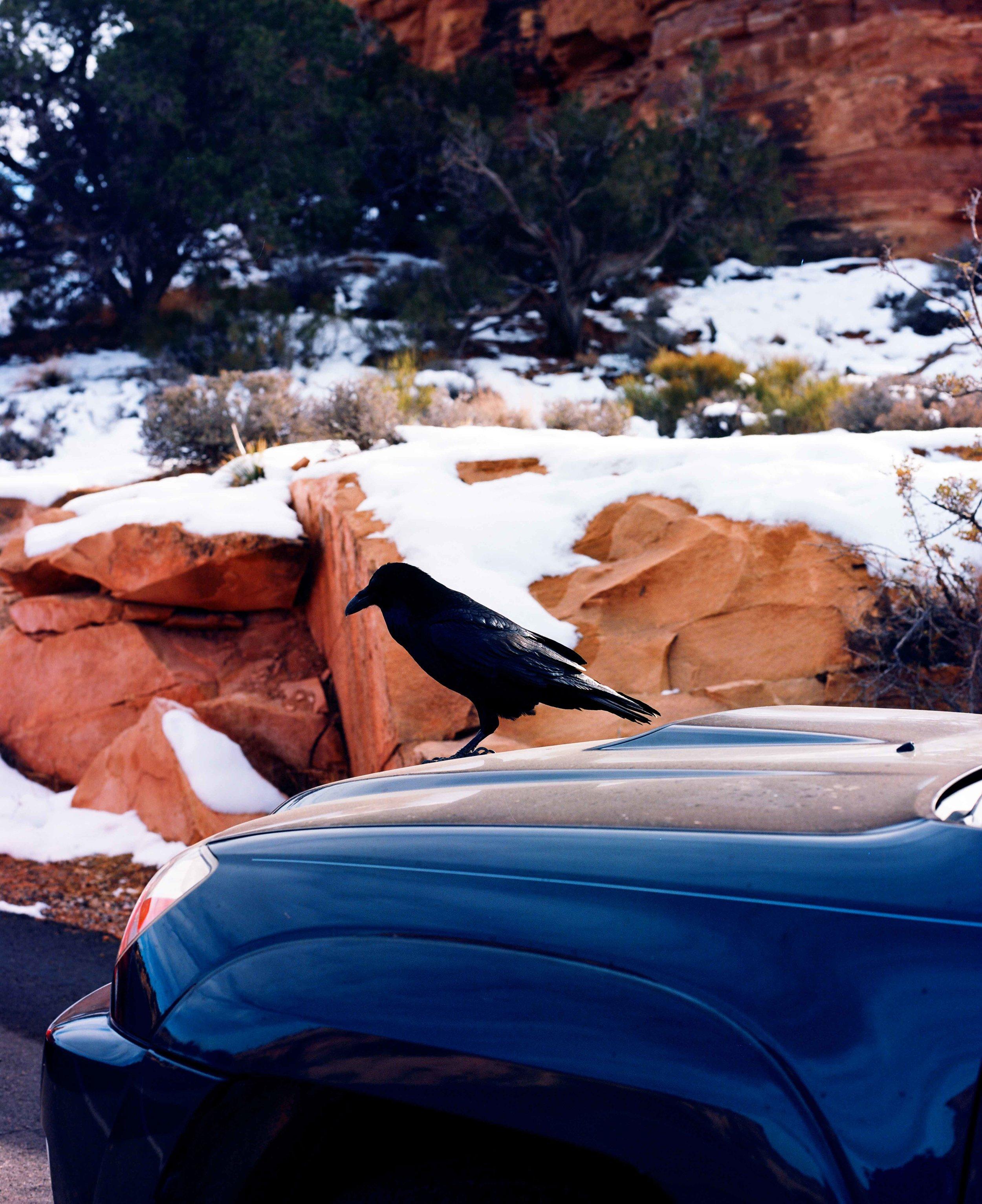Raven w SUV