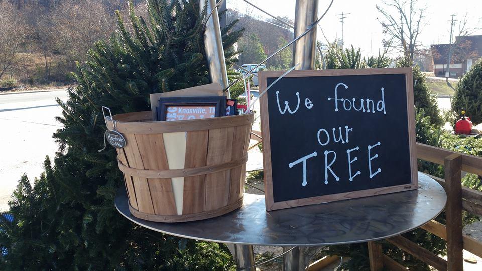 fresh cut christmas tree lot