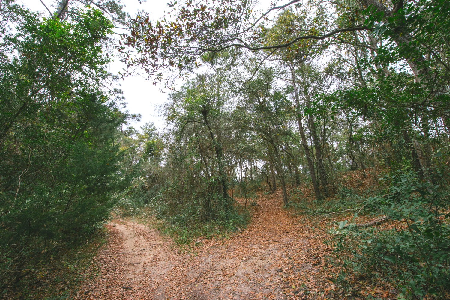 Well-worn pathways, used by locals for the past 70+ years, cover the property.