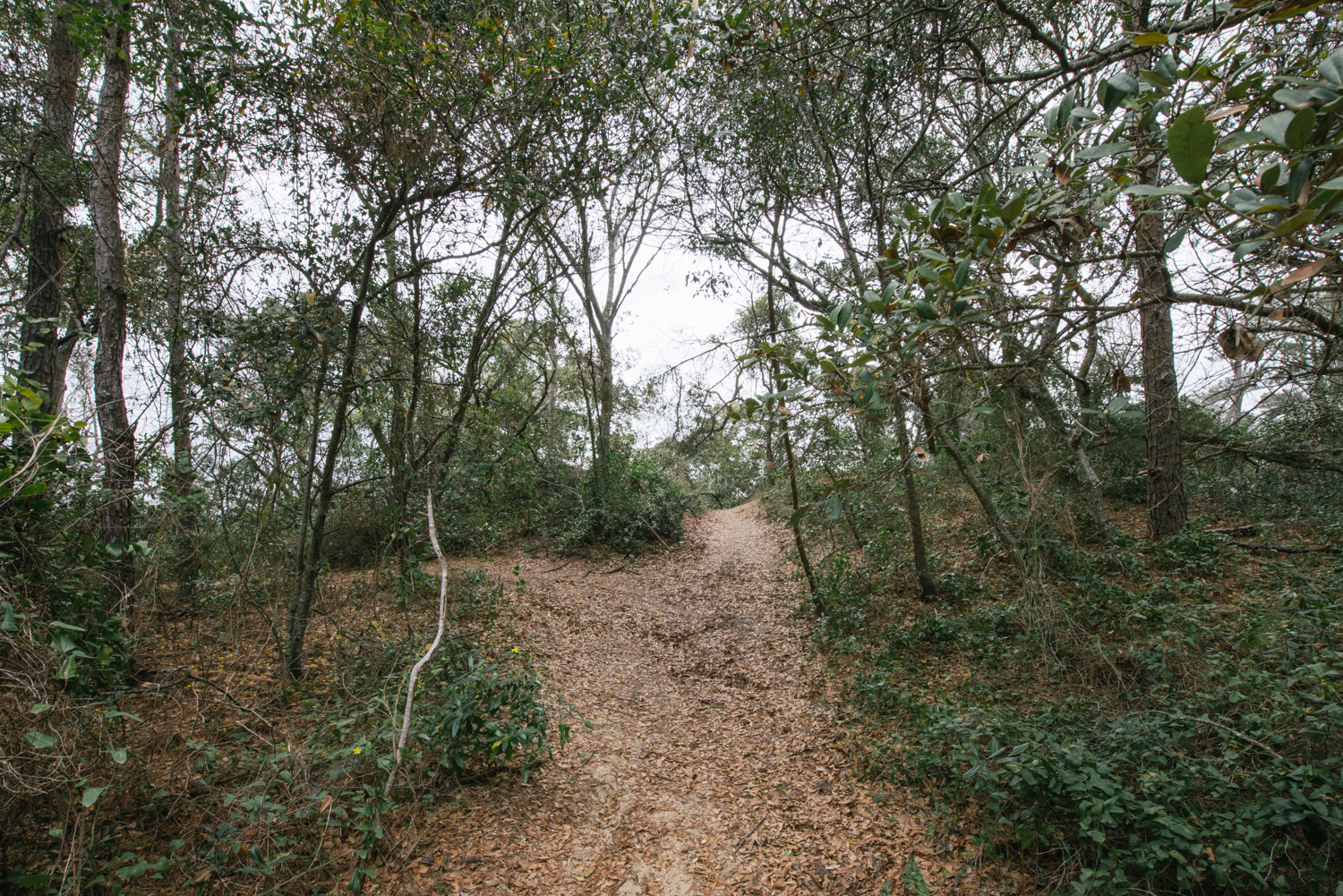 A footpath leads up to the highest dune.