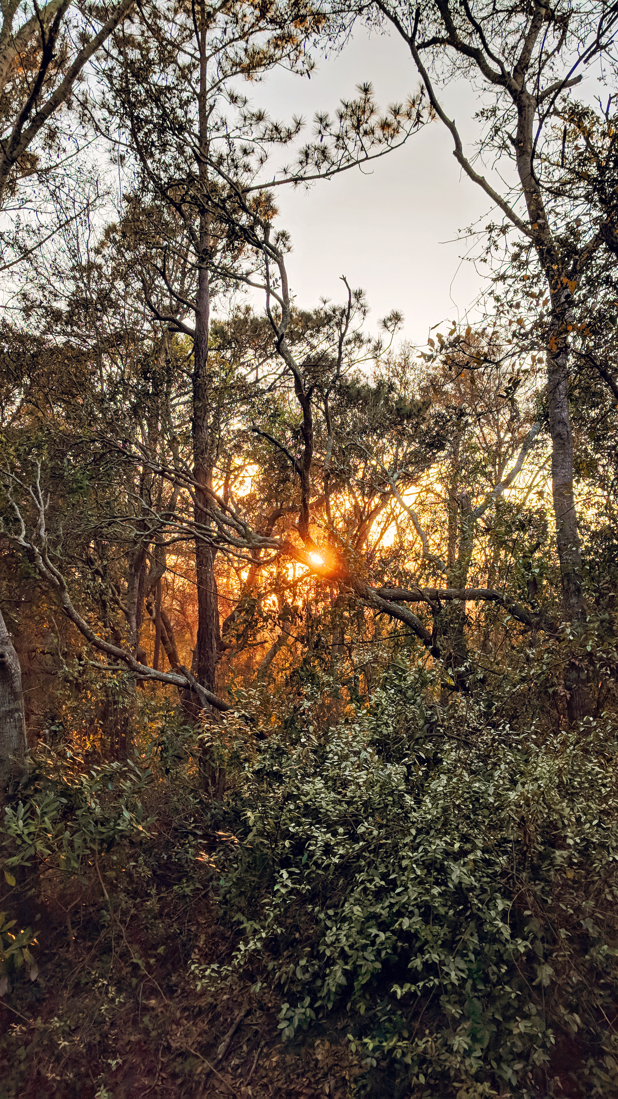 A North Myrtle Beach sunset peeks through the coastal maritime forest at Ingram Dunes.