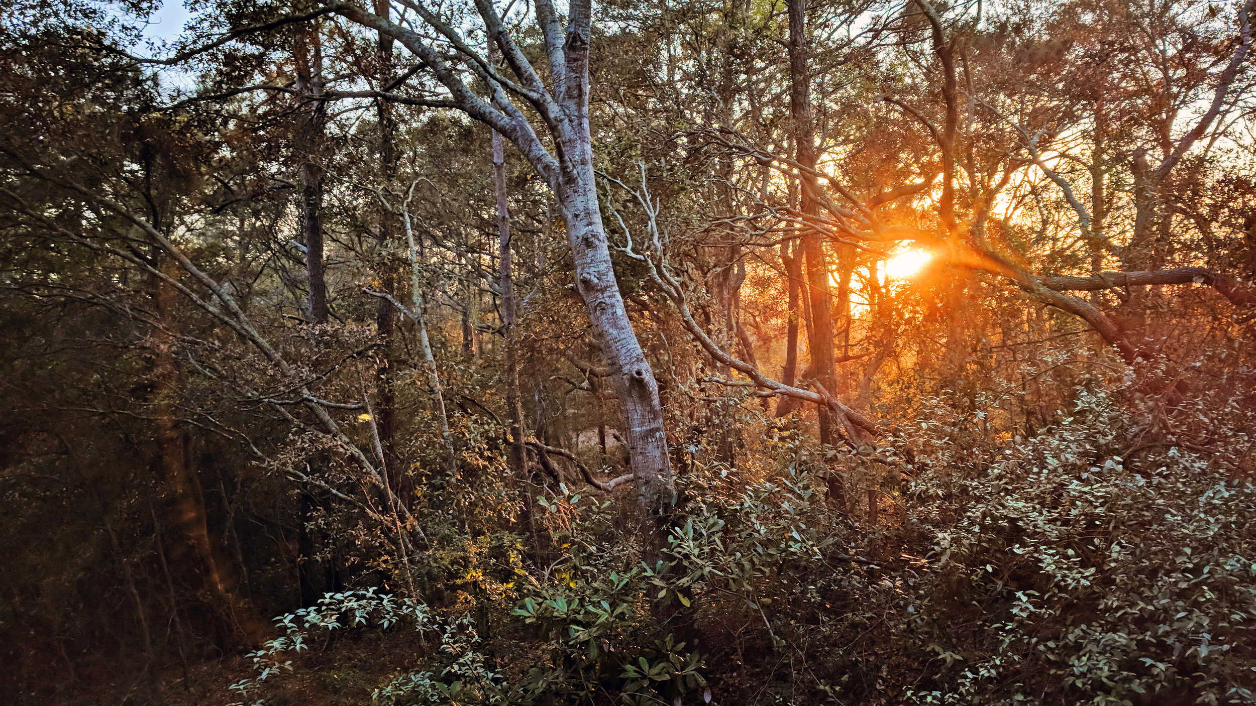 Ingram Dunes hosts a maritime forest full of diverse plant live right in the middle of North Myrtle Beach.