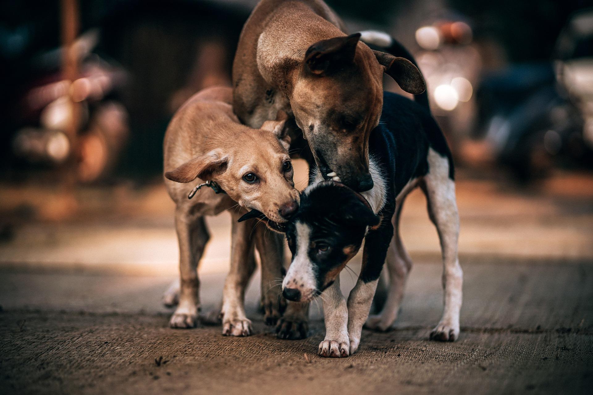 three-dogswry;'.jpg