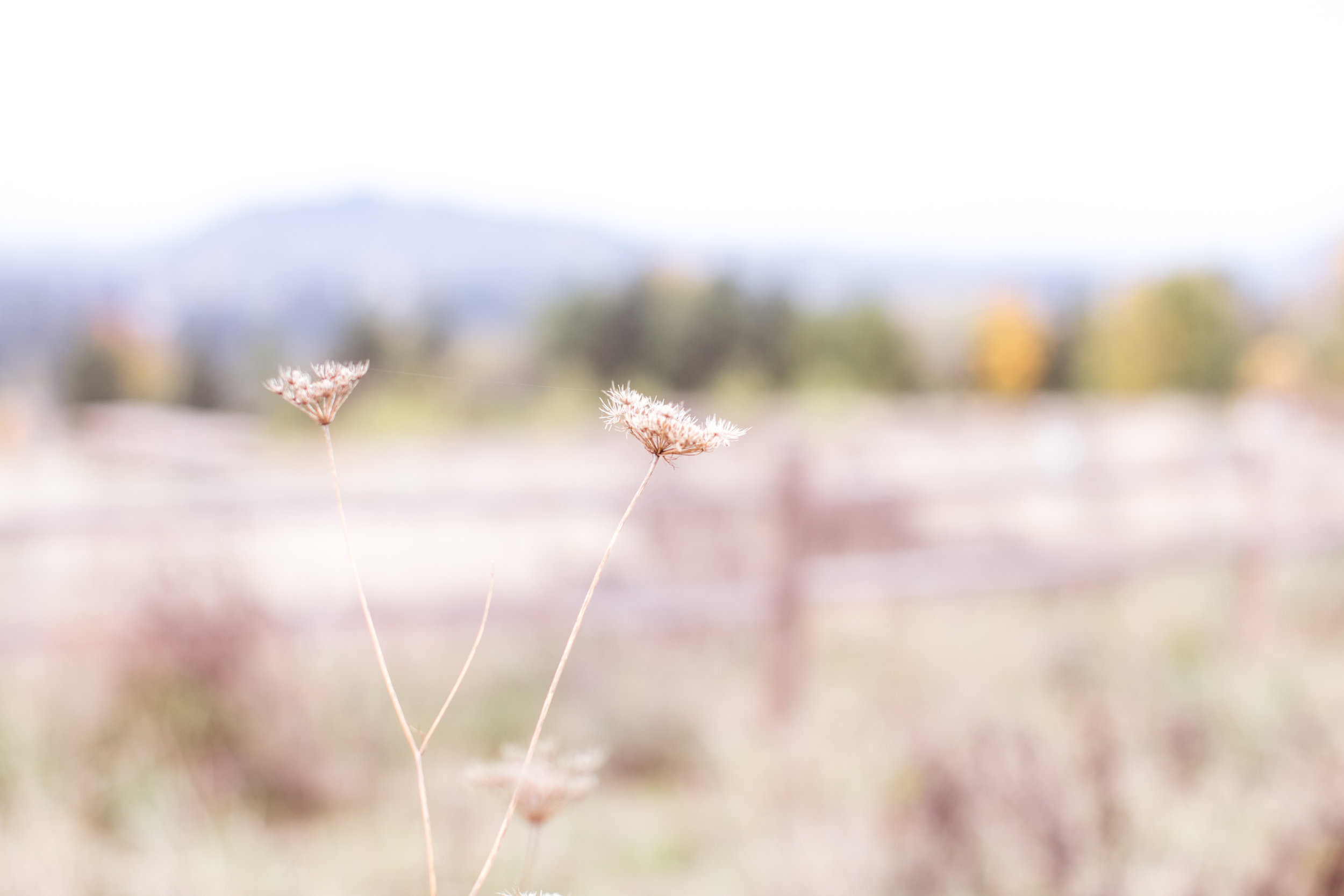 natalie brenner photography