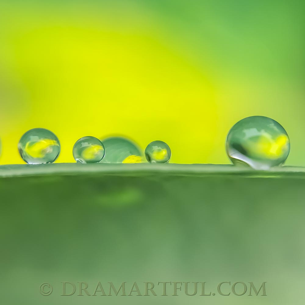 GET YOUR DROPS IN A ROW - 1st place in the October 2018 contest E is for Emerald Green sponsored by the ABC Group, and a peer nomination for Featured Image in The Best of Minimalism group.