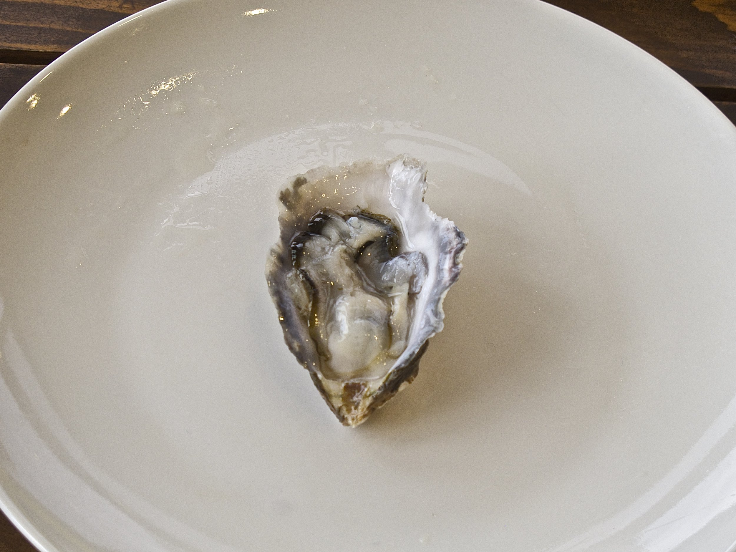 Osaki Claires Oyster
