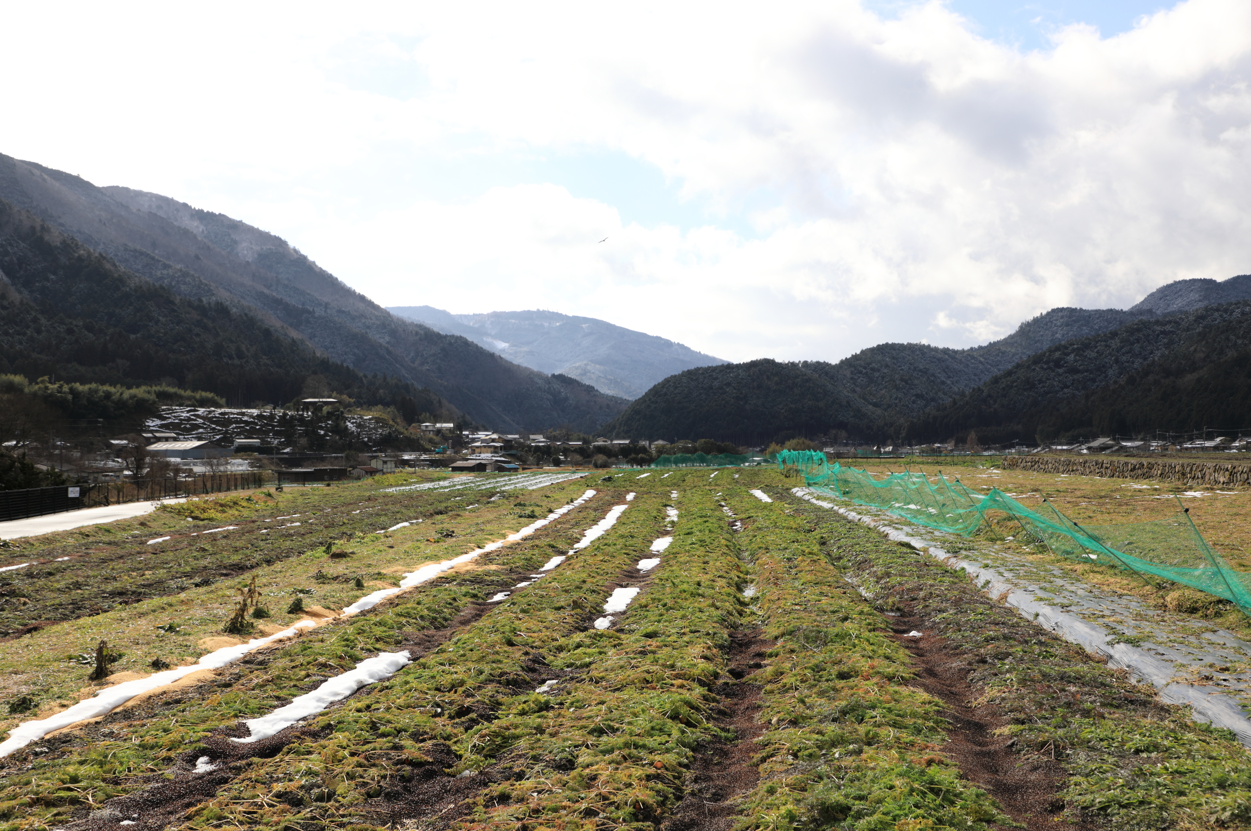 Ohara's reputation is based on vegetables, which are grown everywhere in the valley, and also the pickles that are made from them.