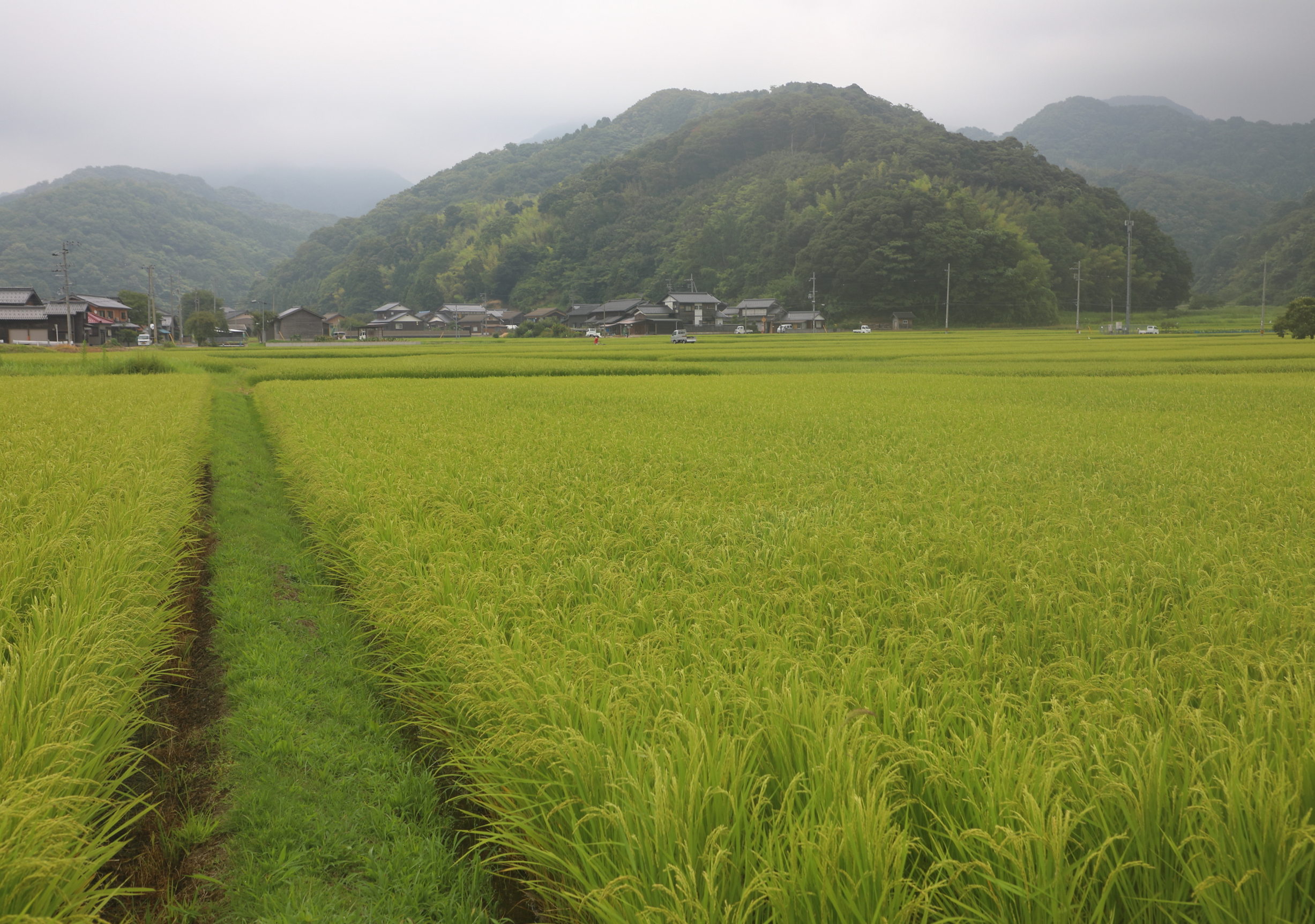 The interior of the Tango Peninsula is filled with large plateaus of rice fields and small farm towns where many residents weave fabric in their homes and at small workshops.