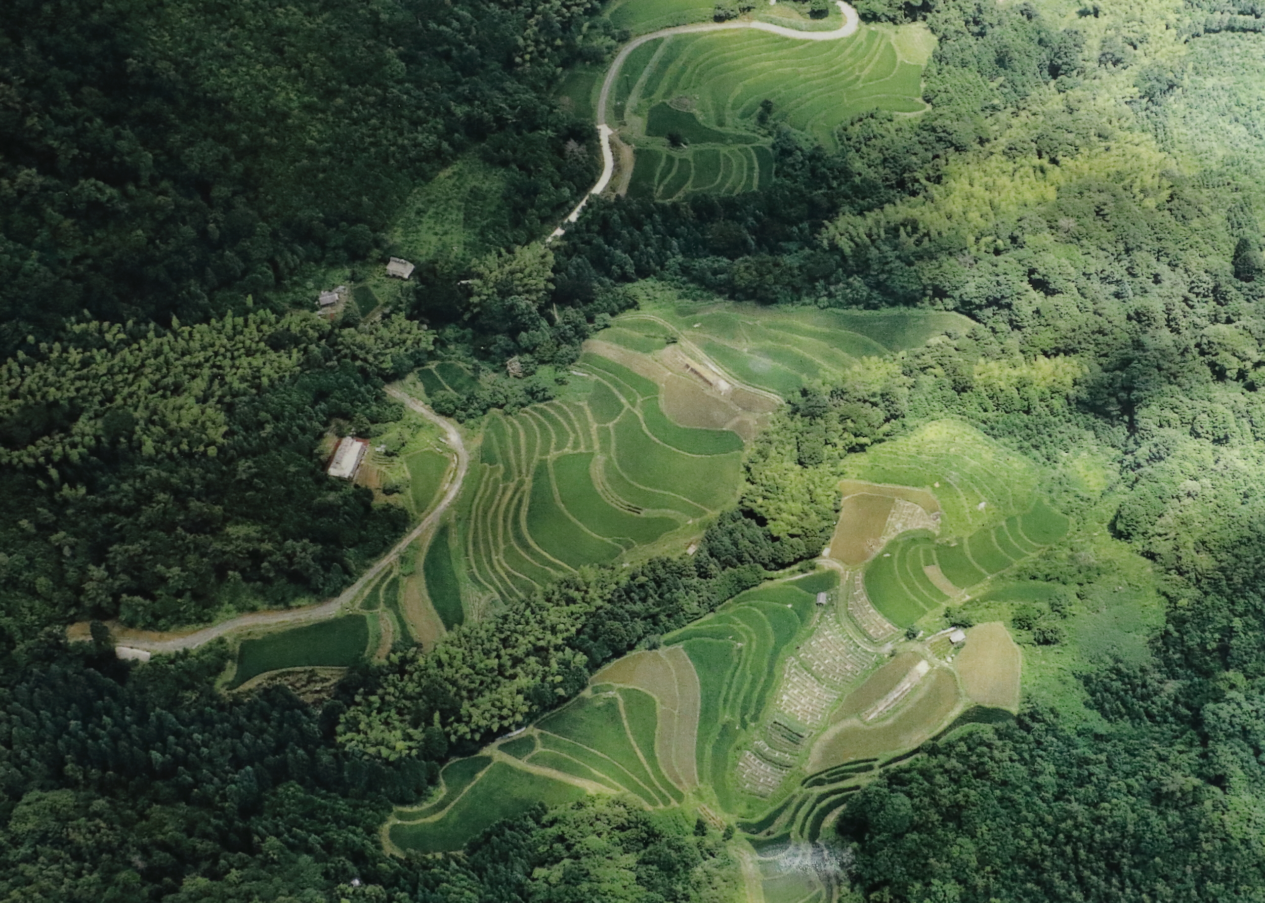 Terraced fields high in the mountains behind the fishing village where Iio Jozo grows its own rice organically with the help of volunteers.