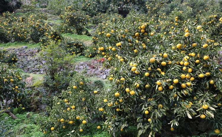 And lemons.