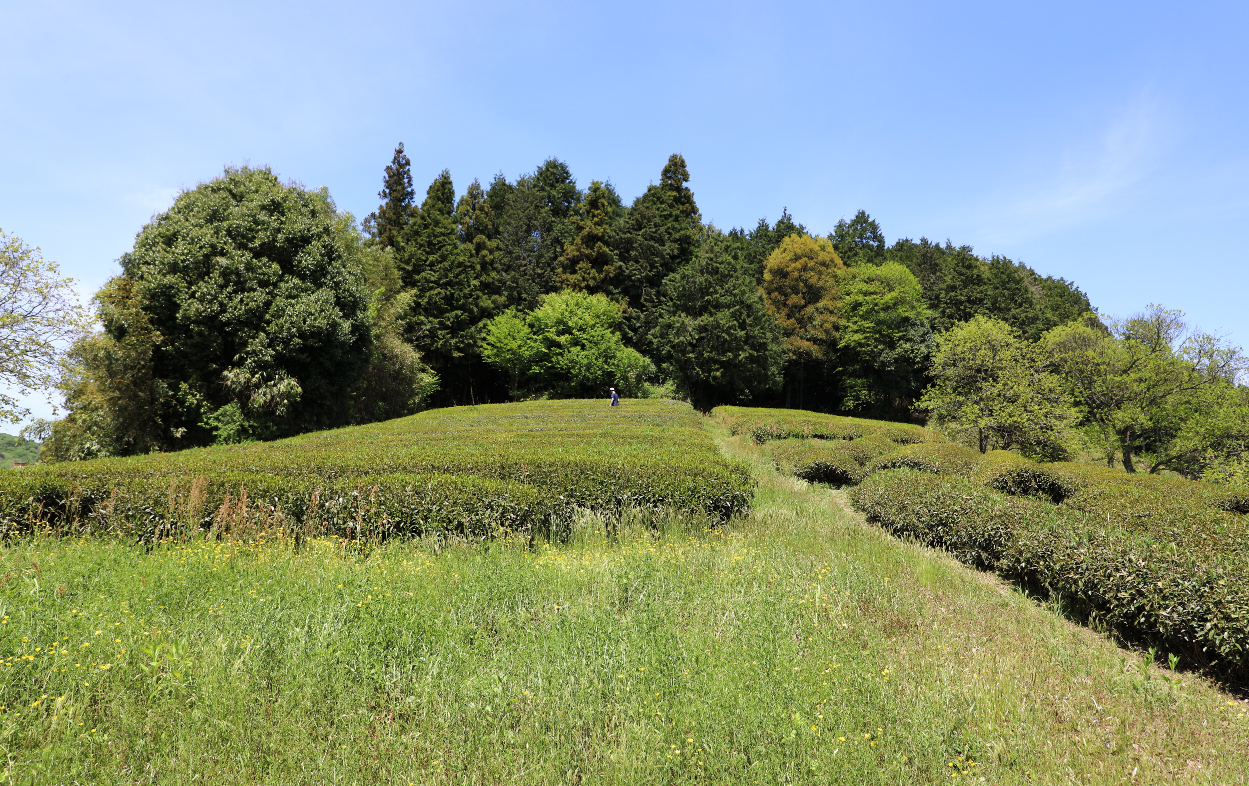 Standing in the middle distance of his tea farm, Genki has created an idyllic landscape—a perfect example of satoyama, which is an expression used in Japan to describe the concept of man existing in harmony with the mountains. It means that a way of life and the environment have been shaped by both man and nature over time to support a mutually beneficial existence.