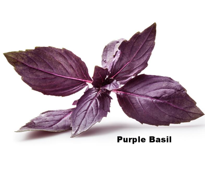 purplebasil.jpg