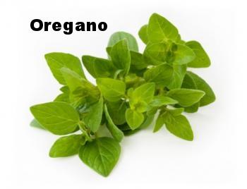 oregano-leaves.jpg