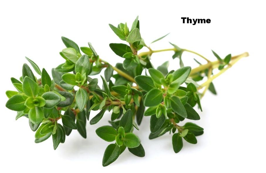 thyme-fb.jpg