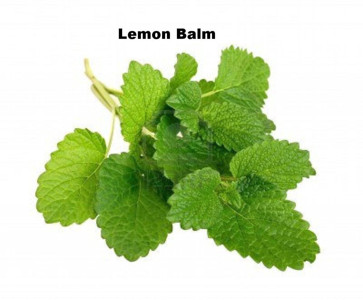 Lemon Balm.jpg