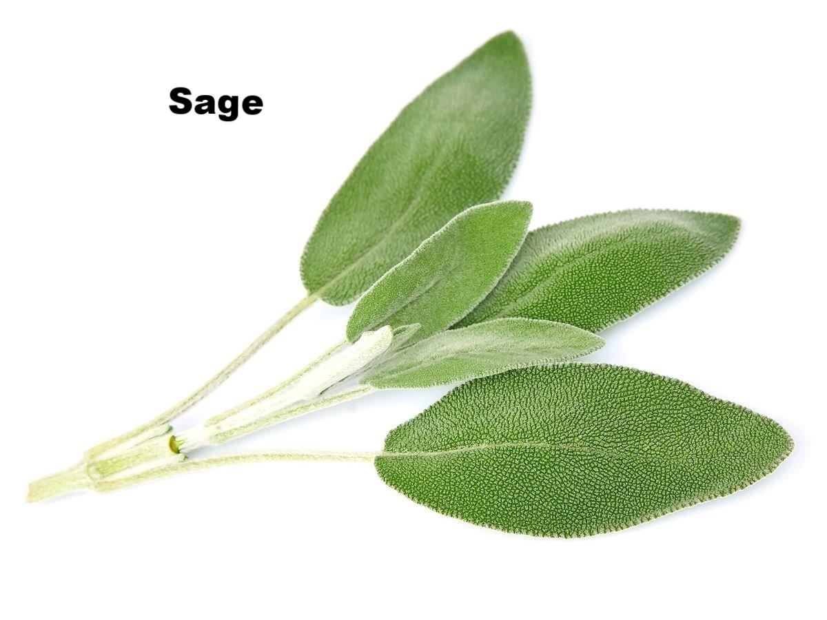 sage2.jpg