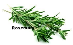 rosemary.jpg