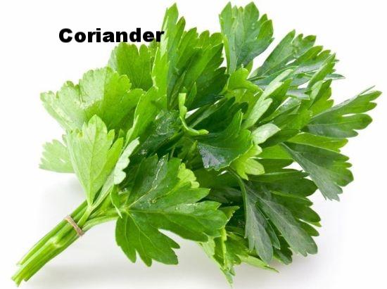Coriander2.jpg