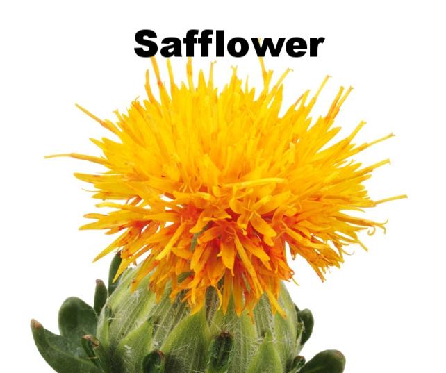 safflower.jpg