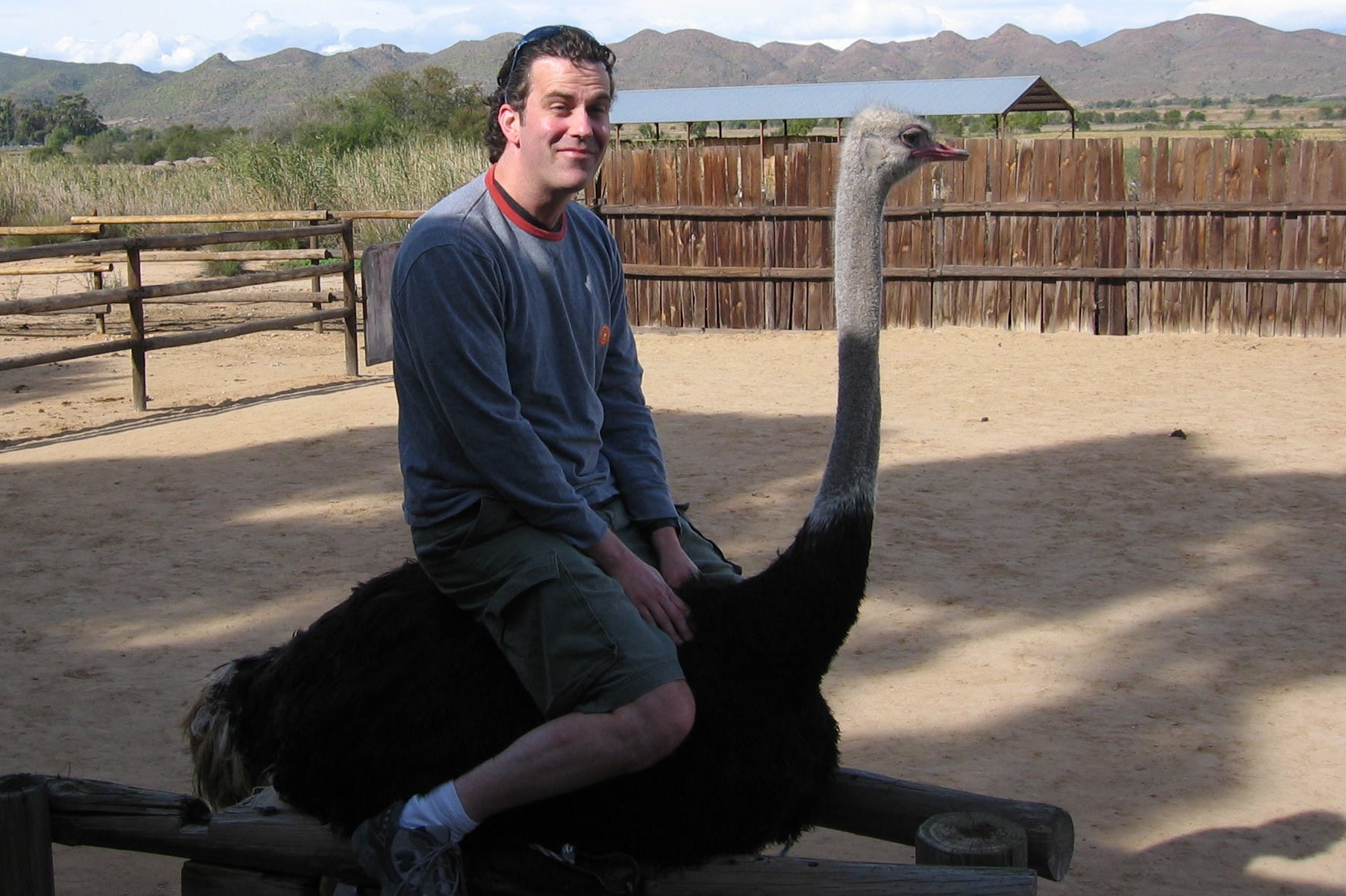 Maybe it's always been a goal of yours to ride an ostrich?