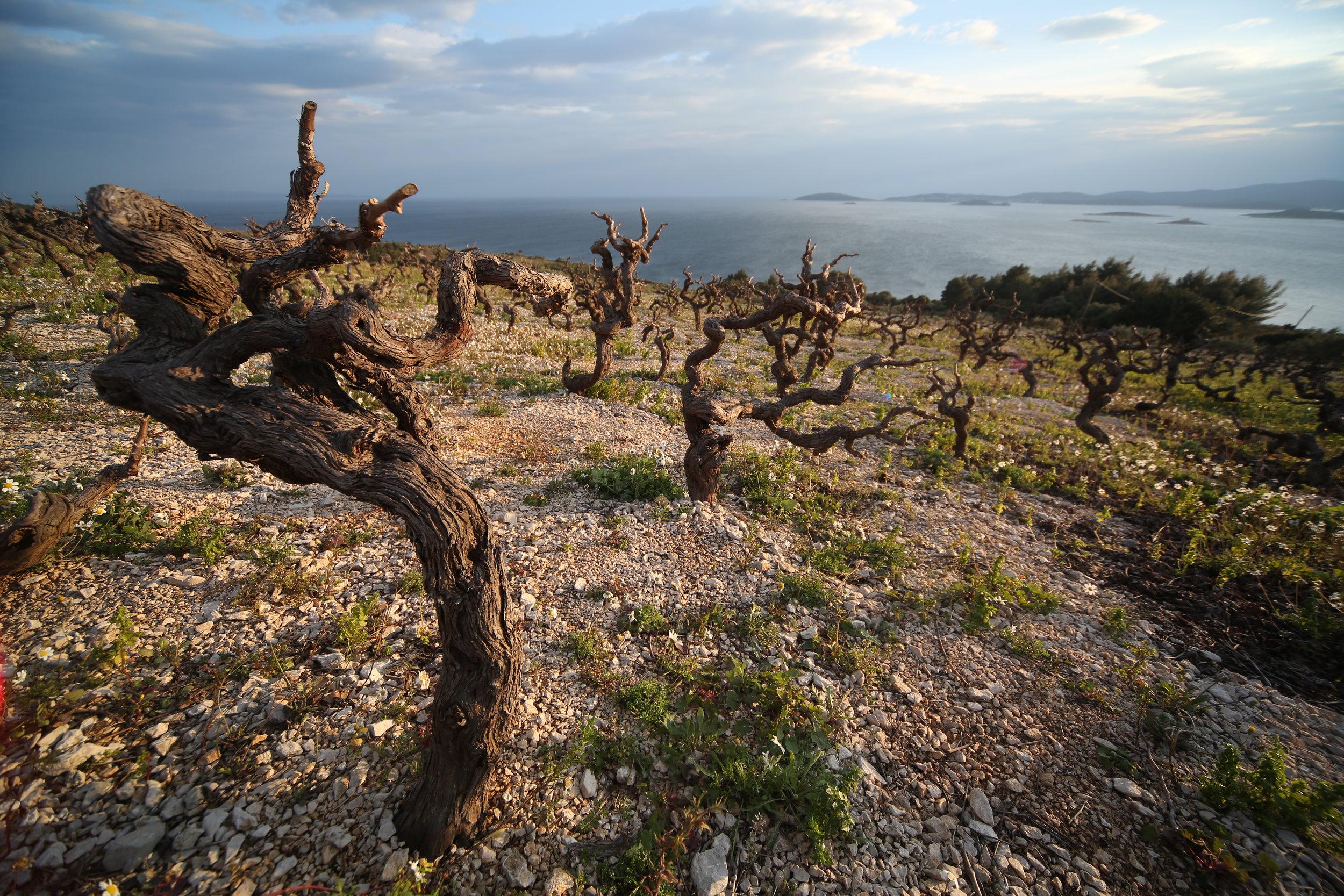 Postup appellation_Peljesac Peninsula.JPG