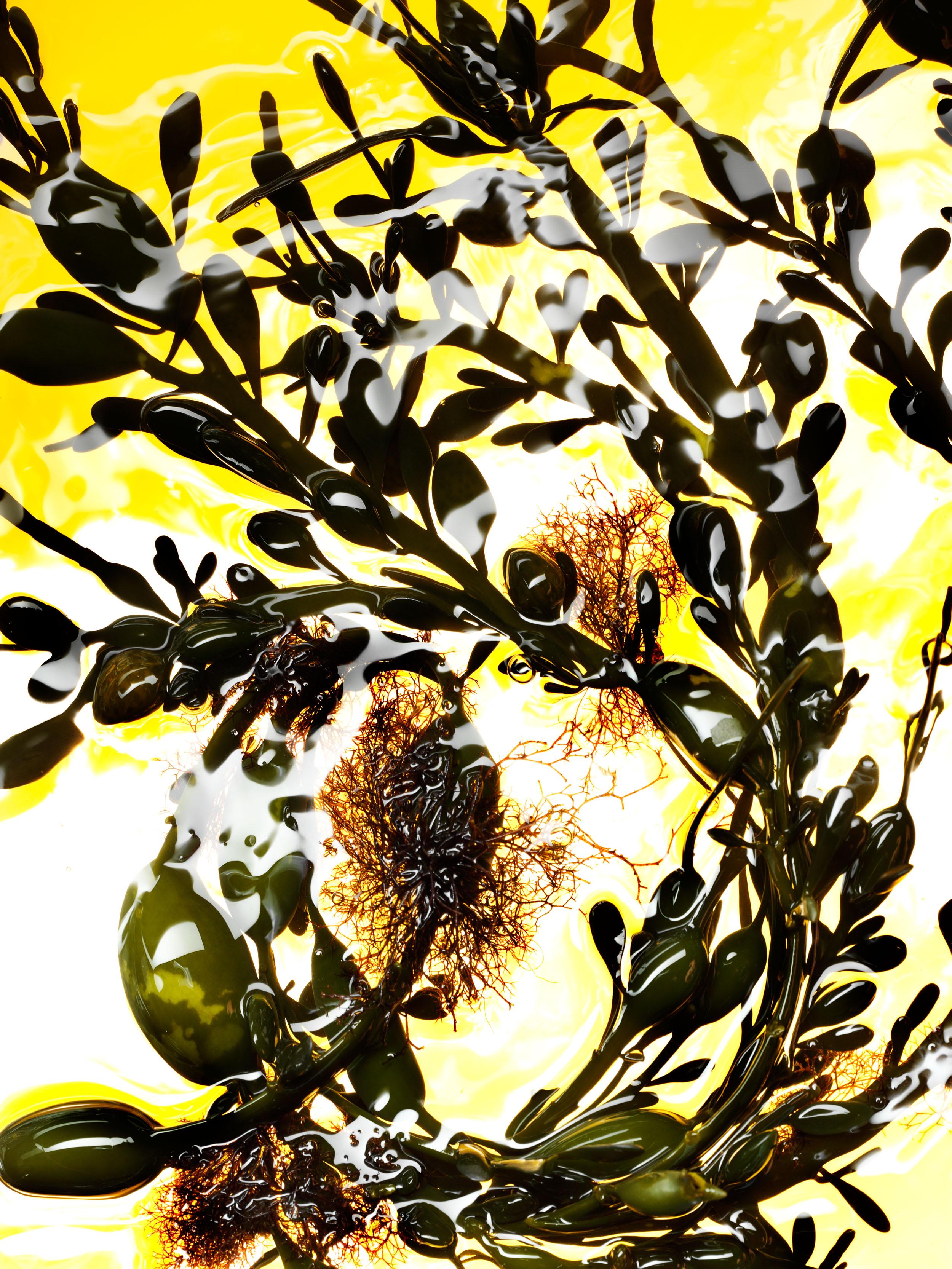 seaweed_5_445.jpg